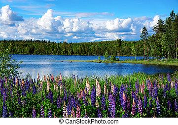 été, paysage, scandinave