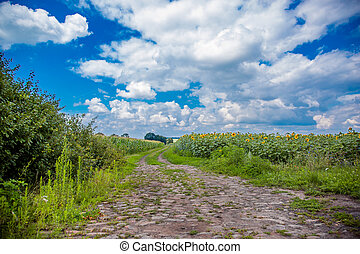 agricole, route, terre