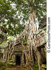 angkor, temple, récolter, ancien, cambodia., ou, siem, cette, rajavihara, prohm