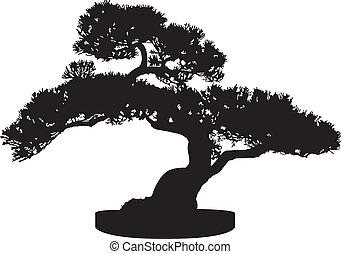 arbre bonzaies, silhouette