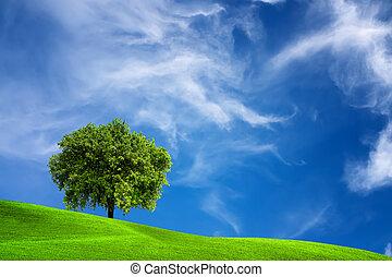 arbre chêne, nature