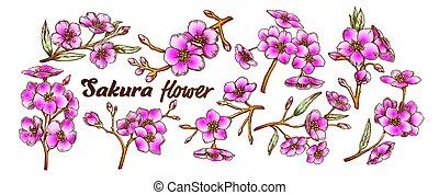 arbre, couleur, sakura, ensemble, branches, vecteur, collection