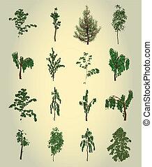 arbre., design., vecteur, ensemble, élément