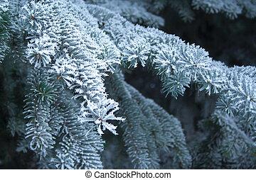 arbre, haut, impeccable, sapin, couvert, ice., fin, branche