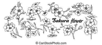 arbre, sakura, ensemble, branches, vendange, vecteur, collection