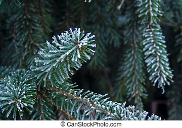 arbre sapin, ice., impeccable, branche, haut, couvert, fin