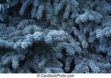 arbre soigné, ice., grand plan, branche, sapin, couvert