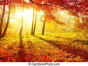 arbres, automne, automne, automnal, leaves., park.