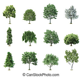 arbres., vecteur, ensemble
