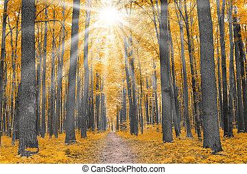 automne, nature., forêt