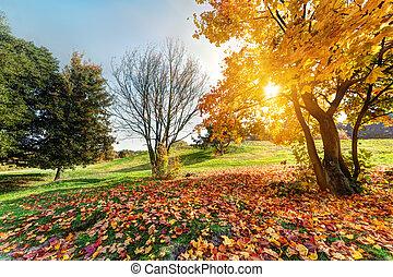 automne, parc, paysage, automne