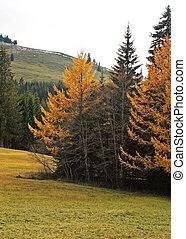 automnes
