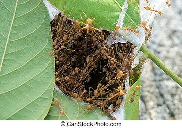 bâtiment, nid, unité, fourmis