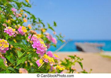 beau, été, mer, mooring., arrière plan flou, fleurs, coloré