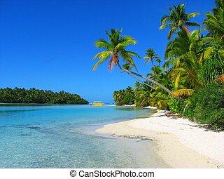 beau, île, aitutaki, pied, cuisez ilôt, plage