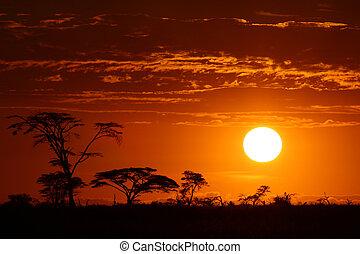 beau, afrique, coucher soleil, safari