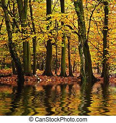 beau, automne, saison, automne, reflété, n, couleurs eau, forêt, vibrant, paysage