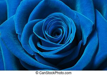 beau, bleu, rose