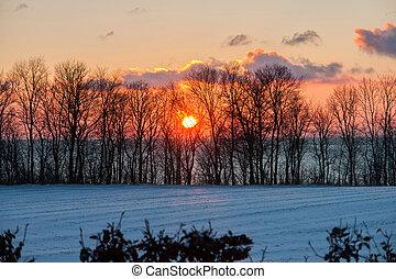 beau, coucher soleil, arbres hiver, neige