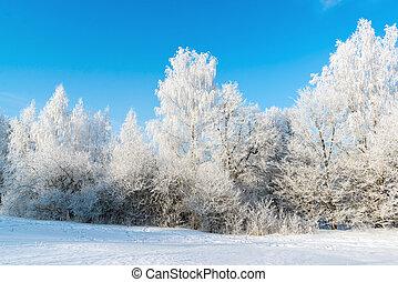 beau, ensoleillé, hiver, jour, forêt