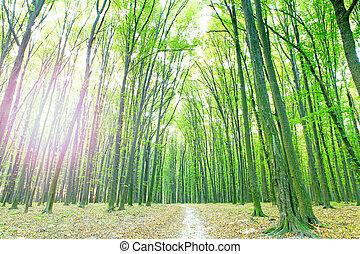 beau, forêt verte