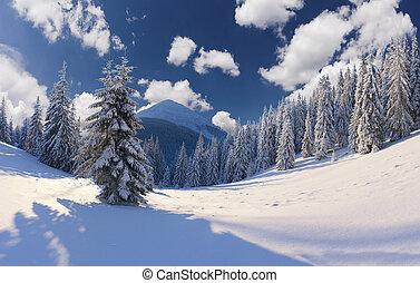 beau, hiver, arbres., neige a couvert, paysage