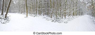 beau, hiver, dédoubler, neige, profond, scène, vierge, forêt, directions, sentier, deux