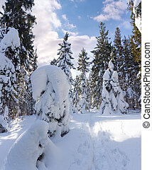 beau, hiver, panorama, neige, arbres, couvert