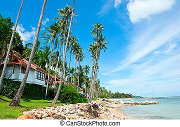 beau, maison, plage, palmiers