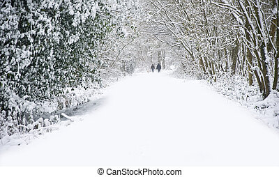 beau, marche, hiver, famille, neige, profond, scène, vierge, forêt, walkway, sentier, chiens