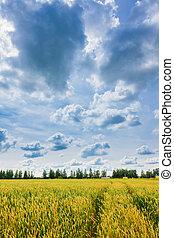 blé, ciel, nuageux, oreilles
