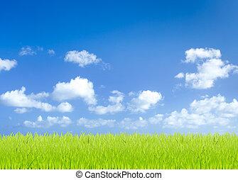 bleu, champs, ciel, arrière-plan vert, herbe