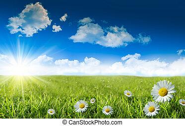 bleu, herbe sauvage, ciel, pâquerettes