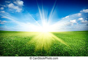 bleu, soleil, ciel, champ vert, coucher soleil, sous, frais, herbe