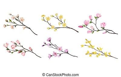 bourgeons, brindilles, fleurir, ensemble, fleur, branches, arbre, vecteur, tendre