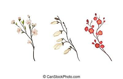 bourgeons, floral, branches, nouveau, fleur, tendre, vecteur, ensemble, feuilles, brindilles