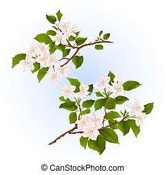 branches, arbre, fleurs, ensemble, deux, vecteur, pomme