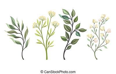 branches, feuilles, floral, ensemble, brindilles, vecteur, tendre, fleur bourgeonne