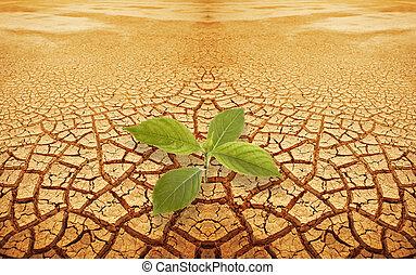 brin, droughty, pousse, terrestre