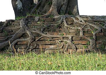 brique, vieux, racines
