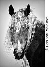 bw, cheval, portrait
