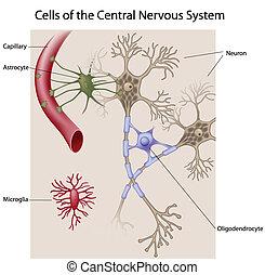 cerveau, cellules