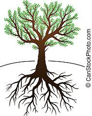 c'est, arbre, racines