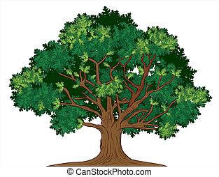 chêne, vecteur, arbre