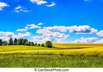 champ, fleurs, pré vert, jaune