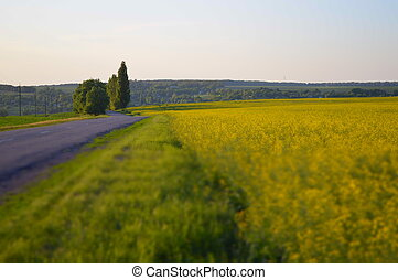 champ, rapeseed, route, rural