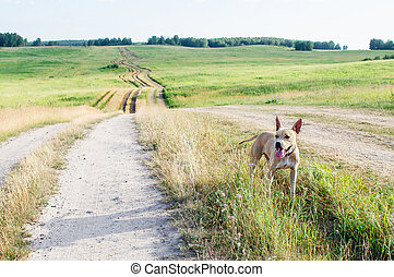 champ, route, terre