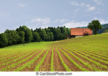champs, agriculture