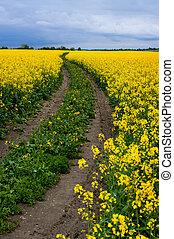 champs, colza, route, terre