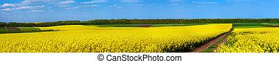 champs, fleur, colza, route, terre